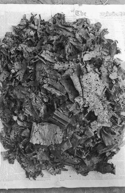 Oxyrhynchus Papyri Pile