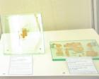 carroll belarus papyri small